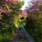 Frühling am Pilion